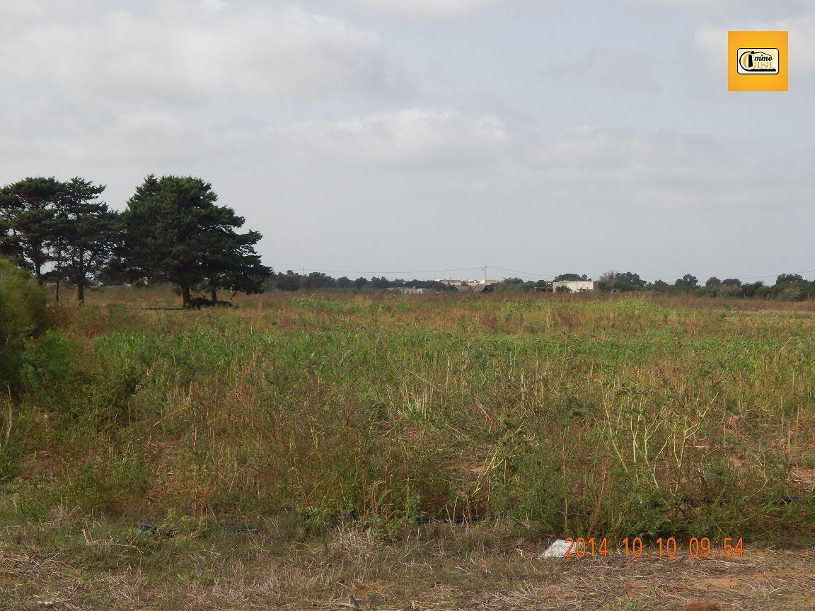 Terrain agricole a vendre kelibia for Container sur terrain agricole