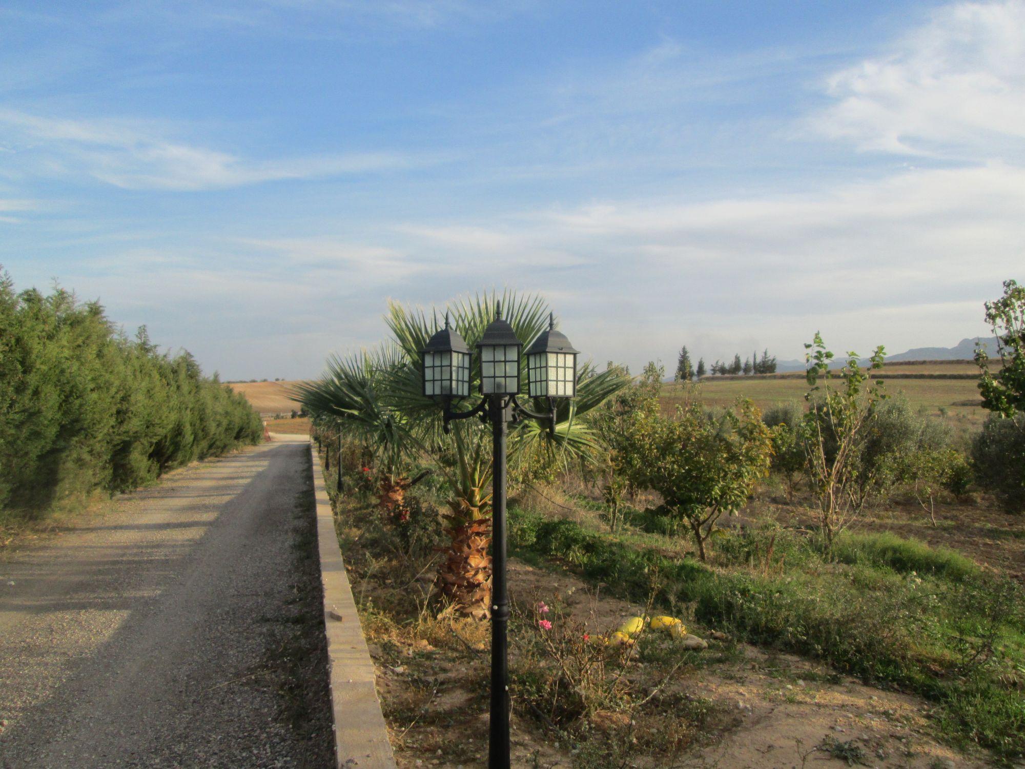 Ferme avec villa sur 7 hectares plant s vente ferme for Agence immobiliere zaghouan