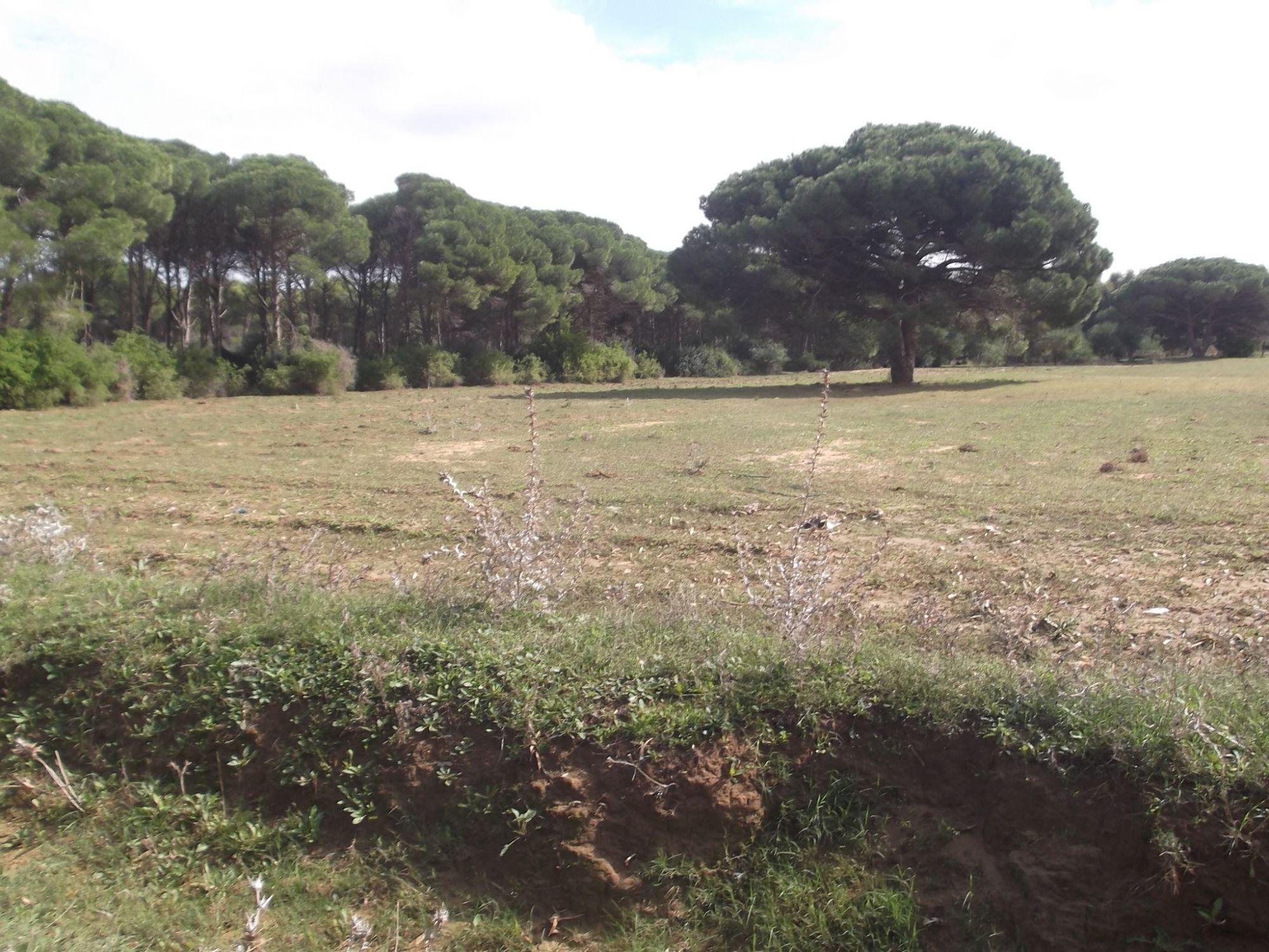 Terrain agricole 3 hec azmour vente terrain azmour immobilier for Construction terrain agricole