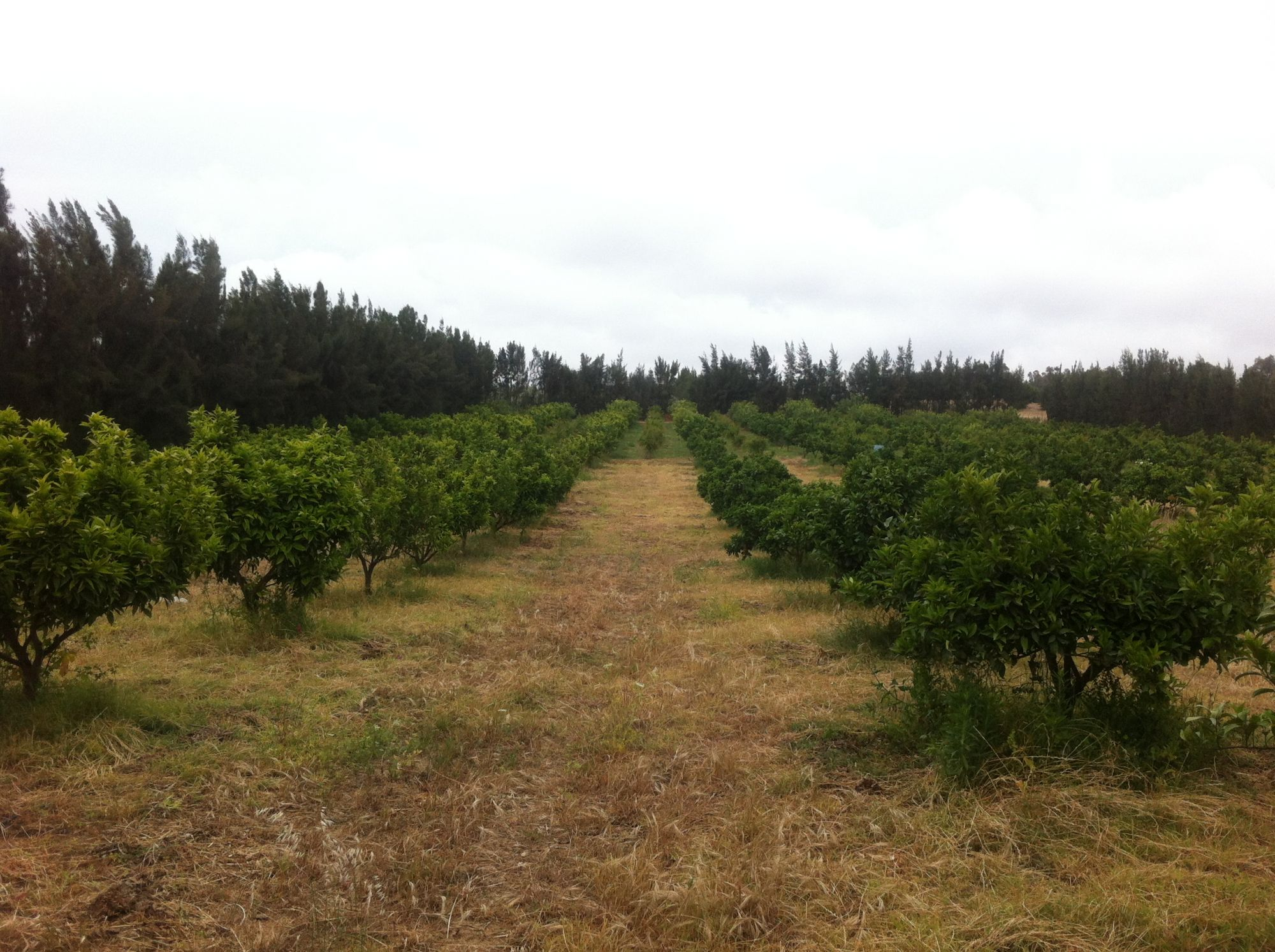 Terrain agricole cultiv hammamet vente terrain hammamet for Construction terrain agricole