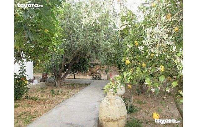 Duplex avec grand jardin plant kkt vente villa hammamet for Vente plantes artificielles tunisie