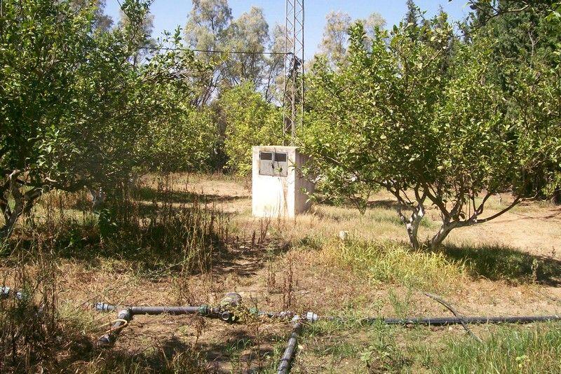 Terrain agricole plant en agrume vente ferme hammamet for Vente plantes artificielles tunisie