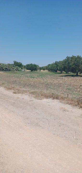 Hec agricole zone bouficha