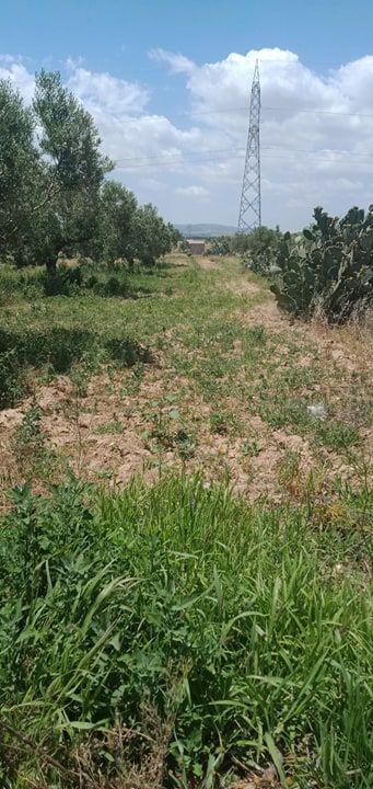 Terrain agricole de 2 hec sidi saaid bouficha
