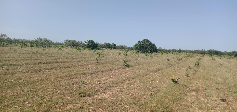 Terrain agricole de un hec et 1000m nu