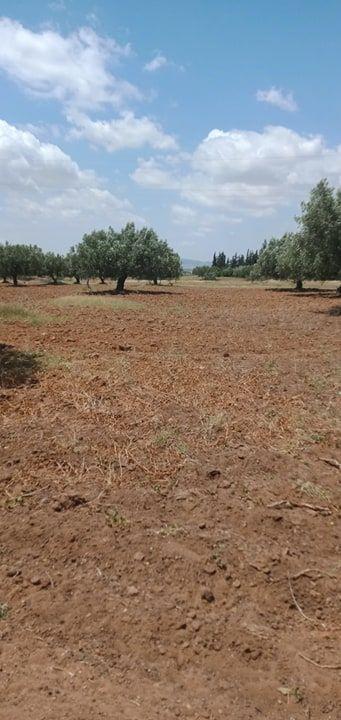 A sidi saaid bouficha terrain agricole de 1hec et 8000m