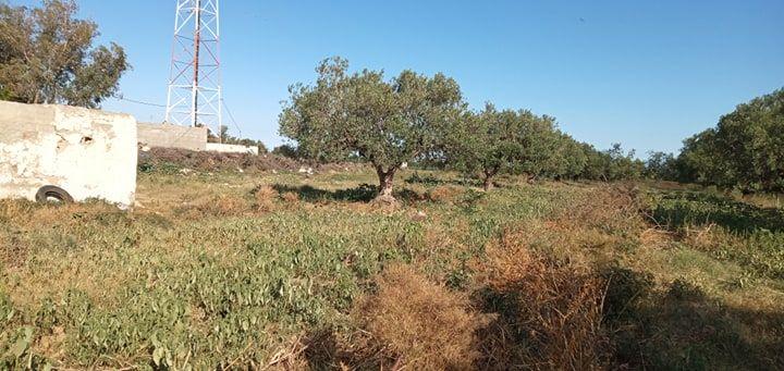 Zone bouficha terrain de 5000m avec maison et 35 olivier