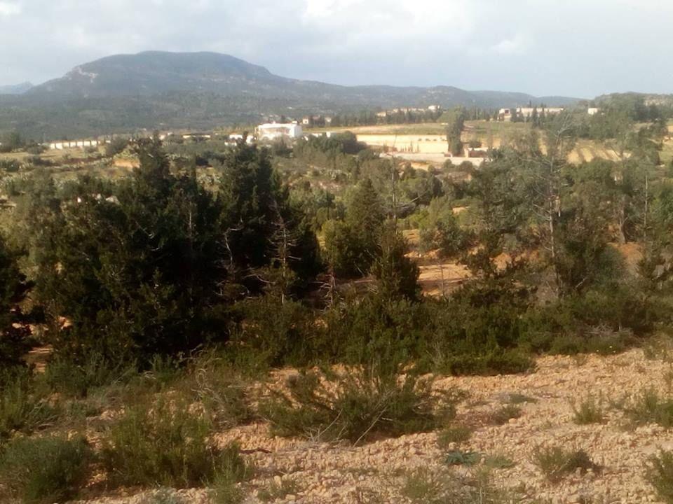 Grand terrain a hammamet pour un projet agricole de 24 hectares