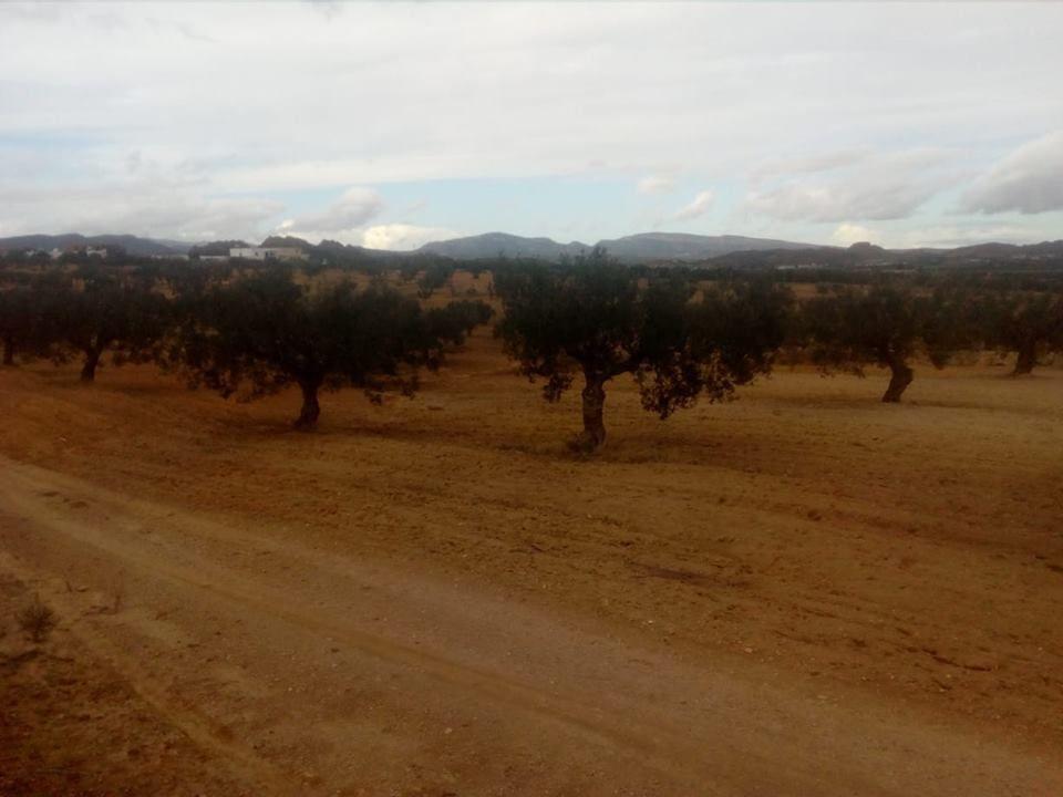 A sidi jedidi hammamet 3 hectares a 10 min de hammamet route acce