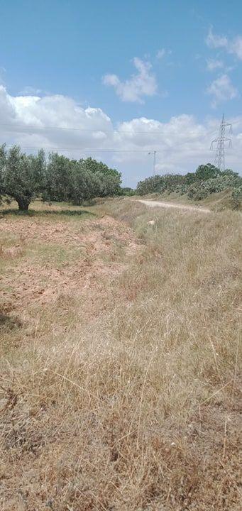A sidi saaid bouficha terrain agricole de 2 hec sur la route