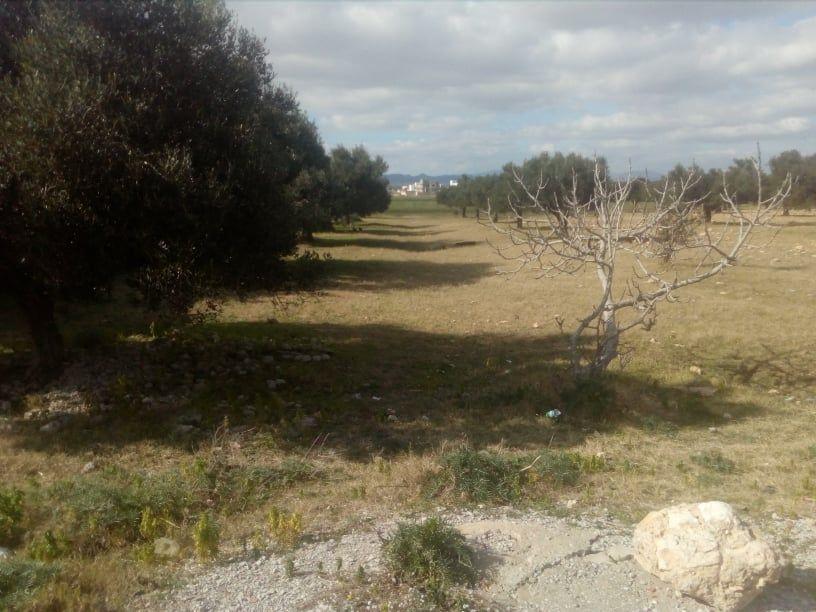 Terrain sur la route g à hammamet