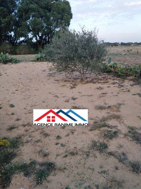 Terrain agricole de 6 hectares a el haouaria cap bon