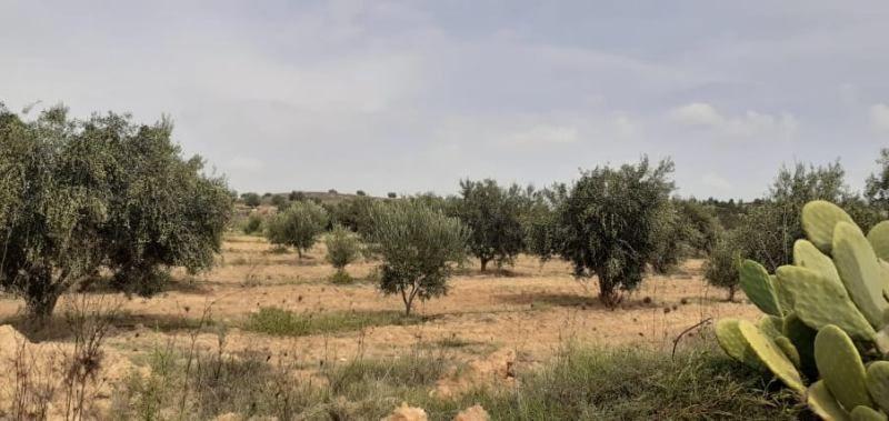 Ferme nadia réf:  vente une ferme
