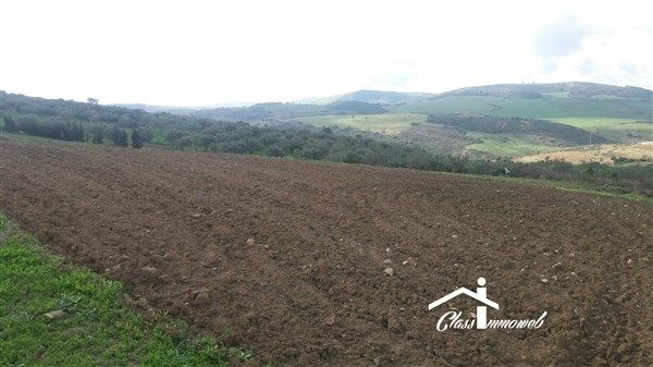 Terrain agricole de 728 ha 97 ares pour 5 milliards à mornag