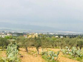 Un terrain av beni wyel dans la compagne d'hamammet nord b