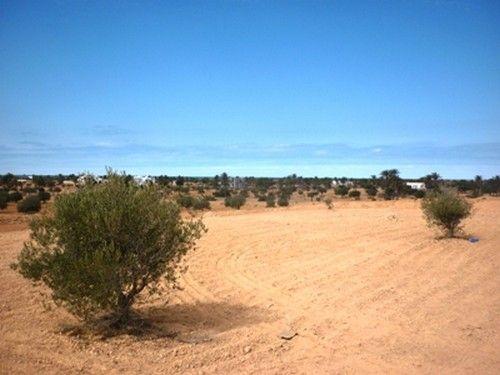 A vendre un grand terrain sania d'oliviers
