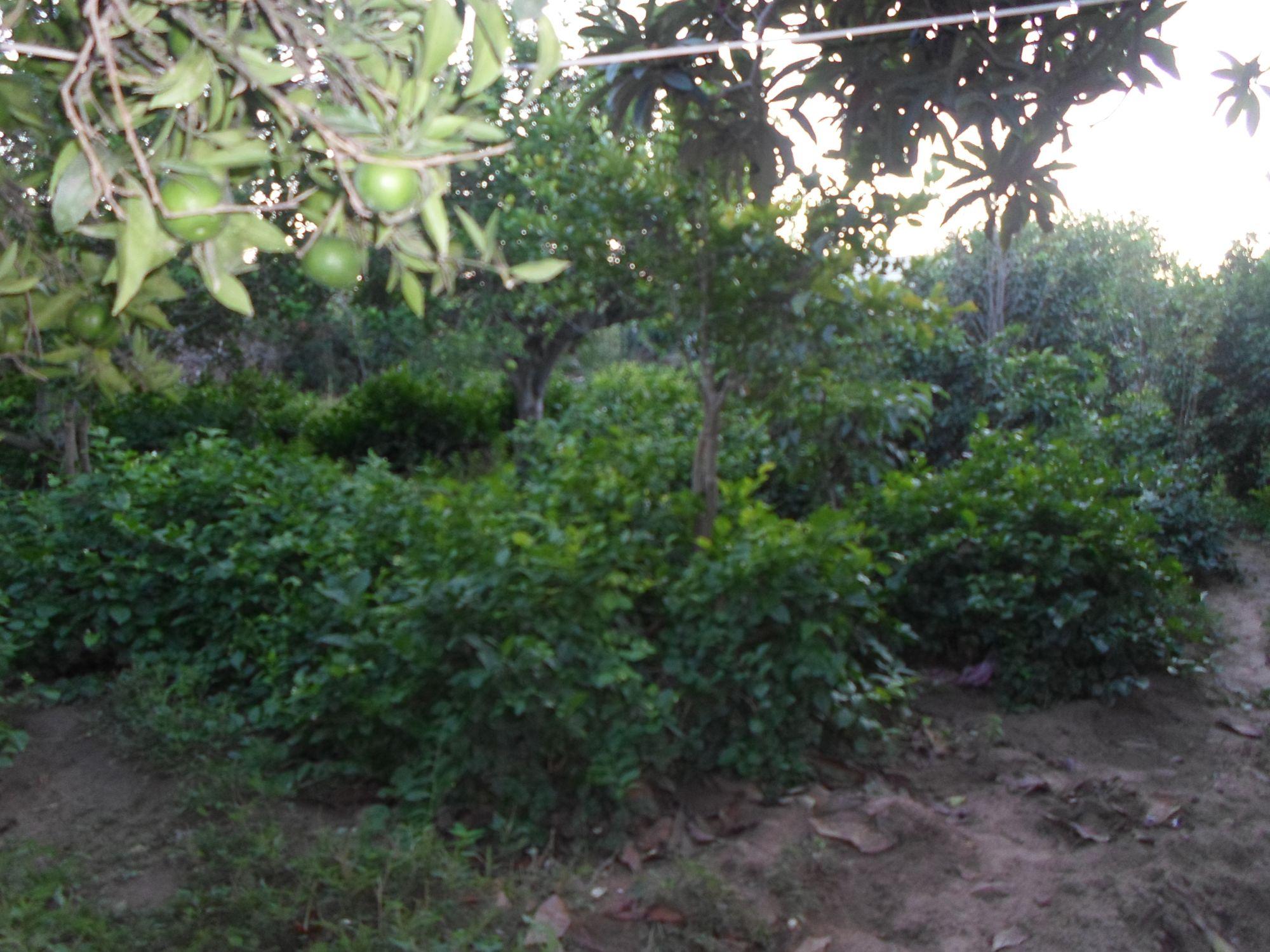 Av senya et 6 maisons trés proche à hammamet
