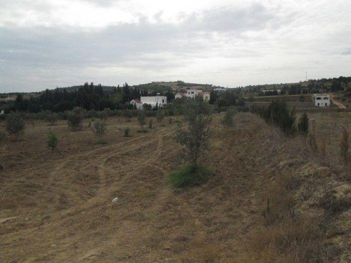 Av terrain agricole à wed lassoued