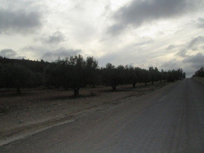 Av terrain à sidi khalifa 15000m