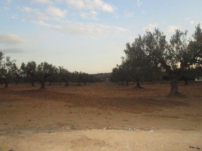 Av terrain 6 hectares à 20min de hammamet sud