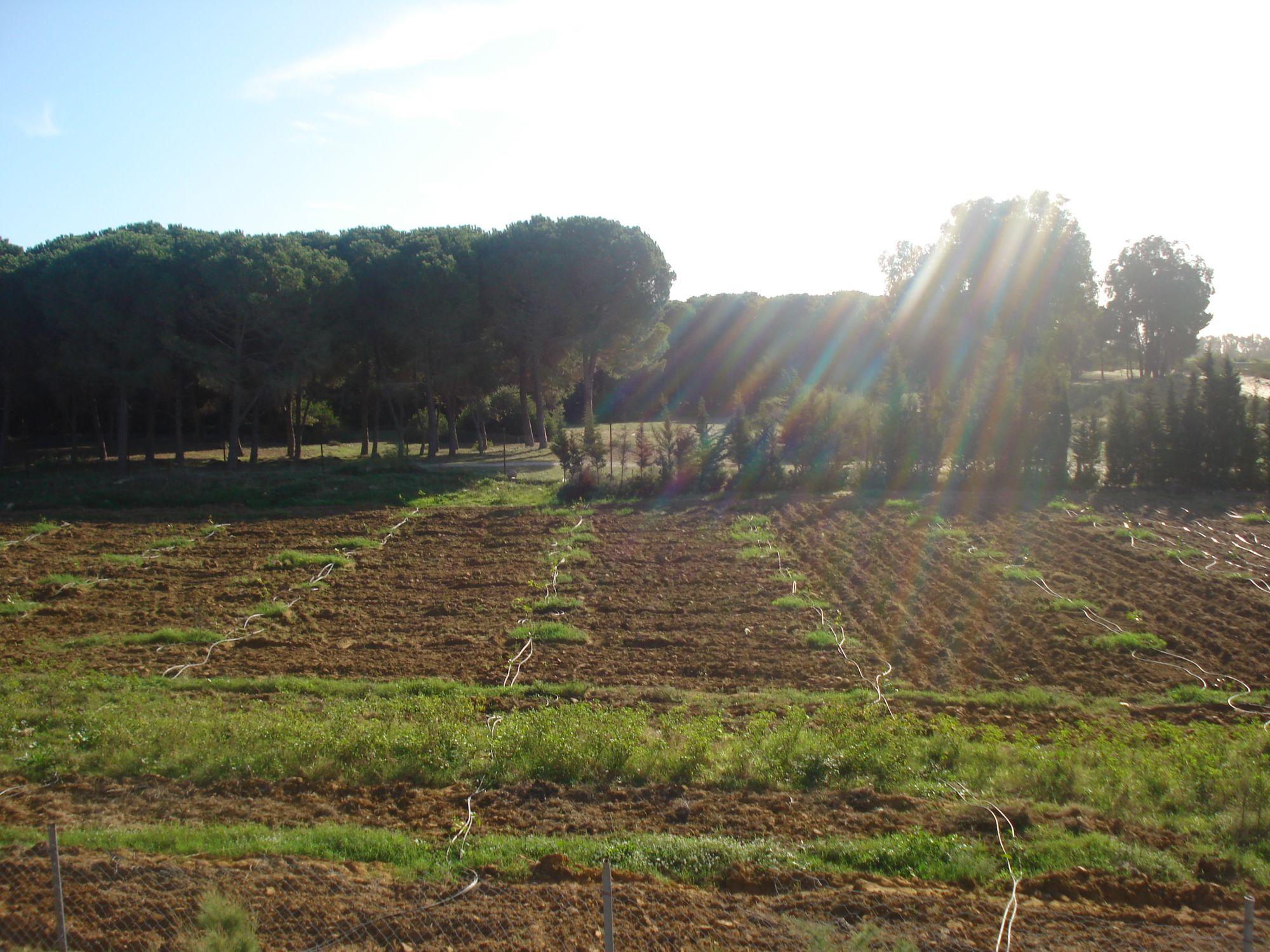 Propriete senia avec villa de luxe bizerte el azib vente terrain el azib for Construction terrain agricole