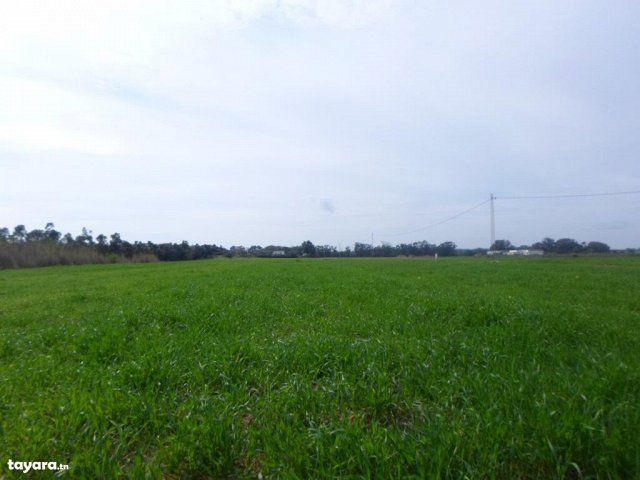 Terrain 26 hectare dar allouch