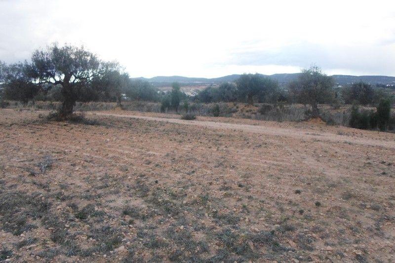 Avdre 1 hectare à 4km de hammamet