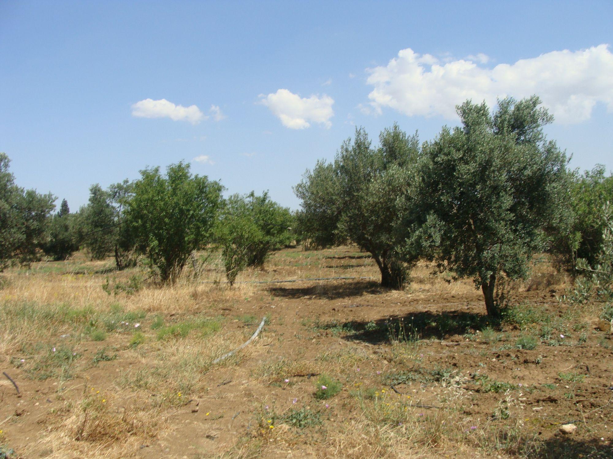 Terrain agricole mogren vente terrain el magren for Agence immobiliere zaghouan