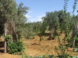 Senia gherdeya richement planté avec tf