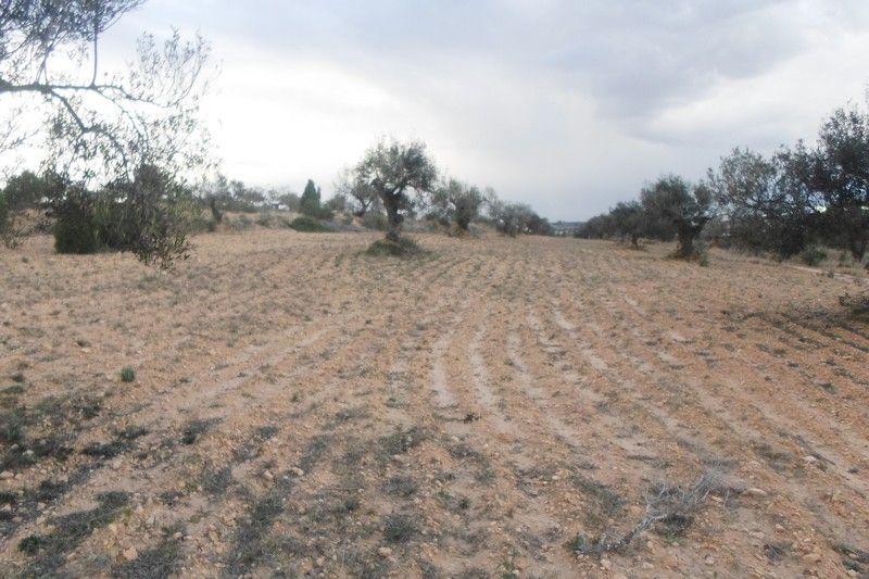 Av un hectare proche de hammamet ktt