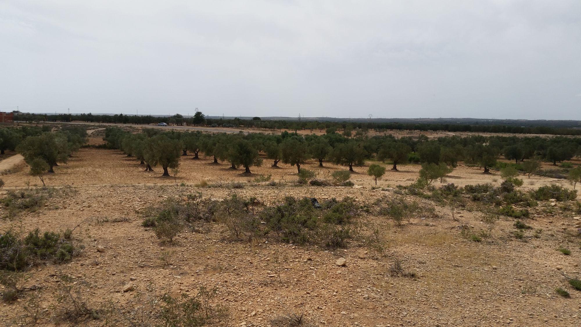 Terrain agricole entre kalaa sghira ennagr vente terrain ennagr for Construction terrain agricole