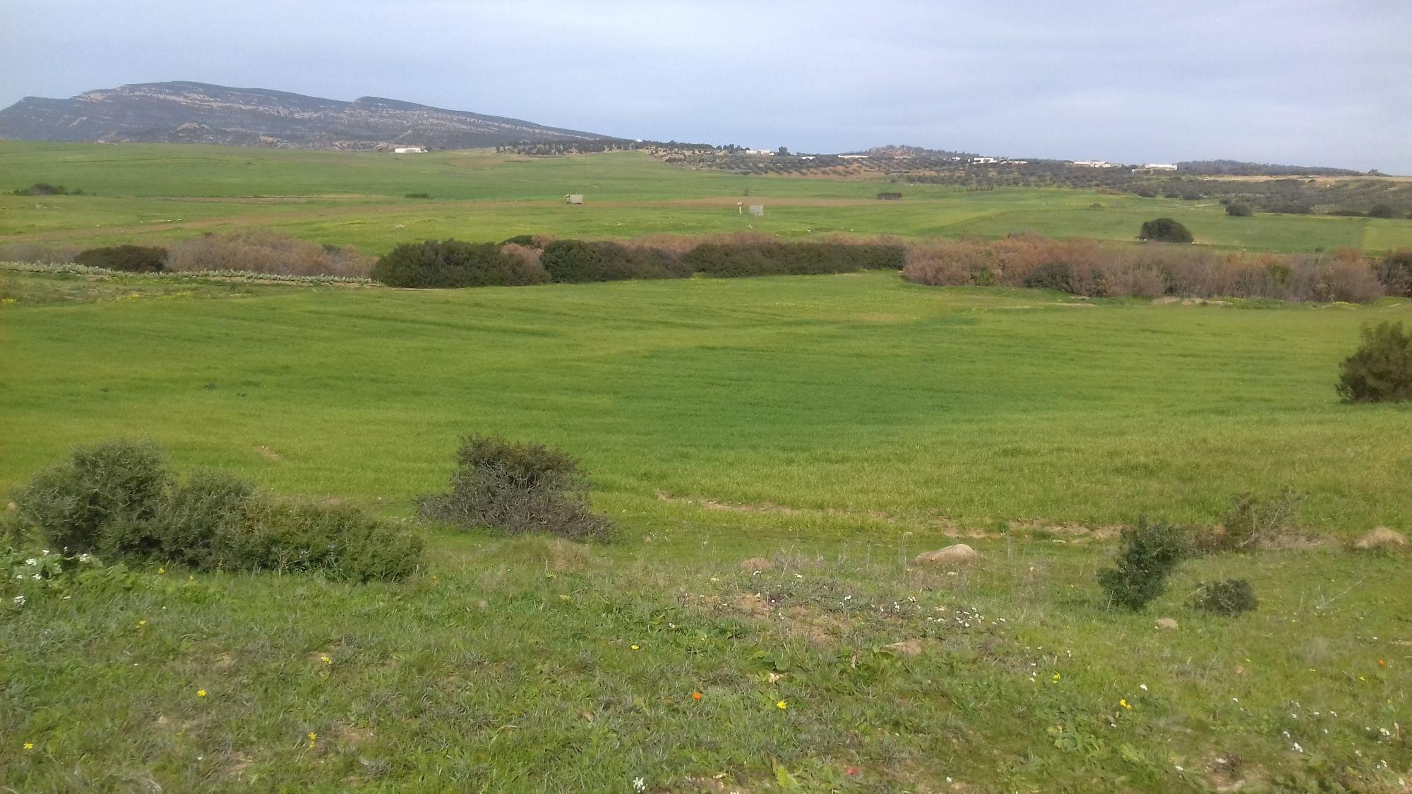 Terrain agricole vendre el monchar route sidi jdidi vente terrain sidi jedidi for Construction terrain agricole