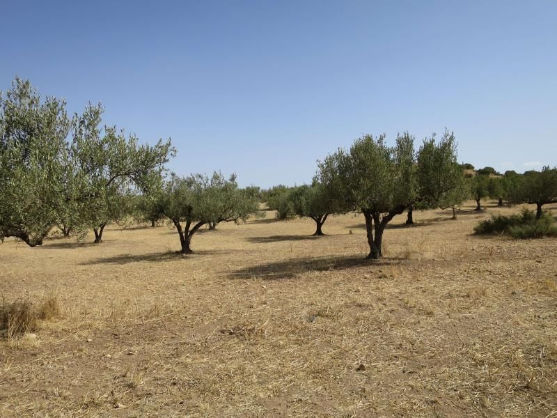 A vendre un terrain agricole sur la route d 39 el fahs for Container sur terrain agricole