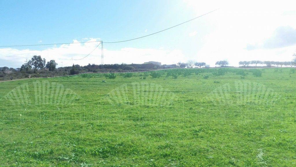 Terrain agricol 4hectar ain rahma bouficha