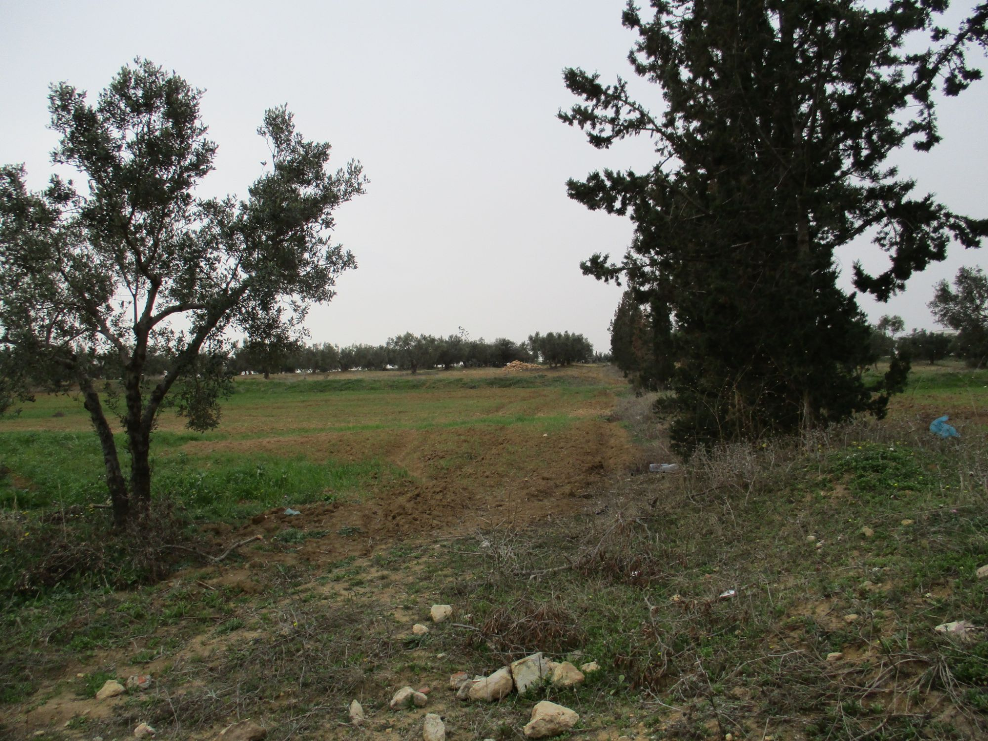 Terrain agricole de 3000 m à sidi jedidi hammamet