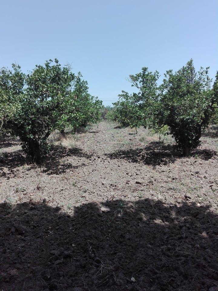 Terrain agricole 1hectare 5000 hatous sidi jedidi