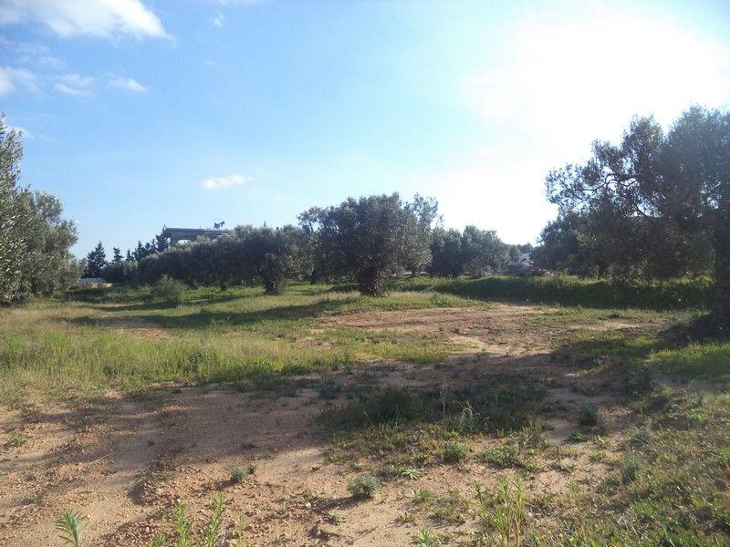 Av terrain de 550 proche hammamet yasmine