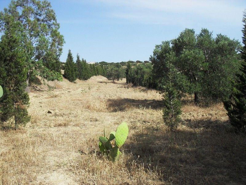 Terrain plant d oliviers vente terrain hammamet for Vente plantes artificielles tunisie
